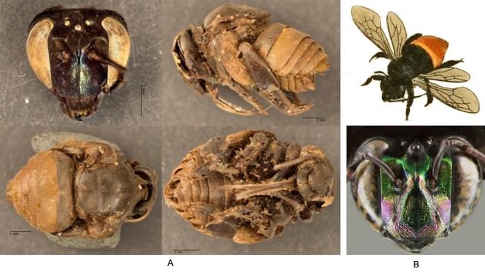 insect mummies gon' get yo mama