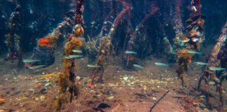manglares1