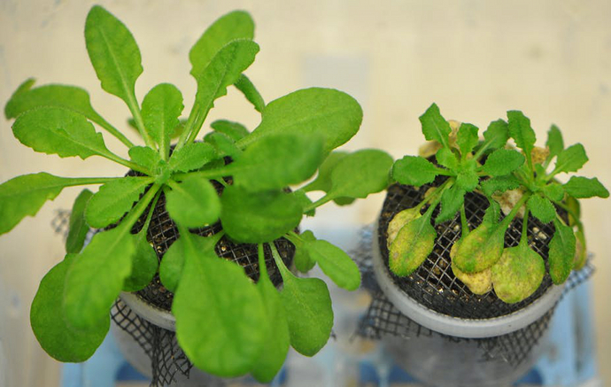 MSU botany experiment