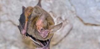 smelly bat