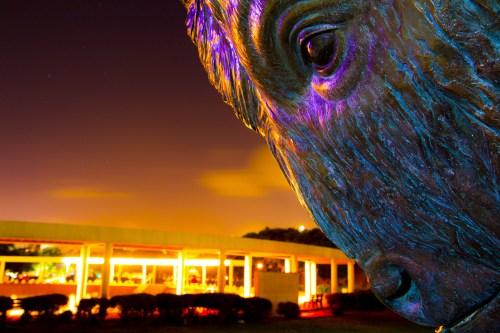 Corpus Christi Buffalo © Matthew Thornton