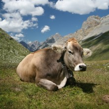 A Cow Named Horse