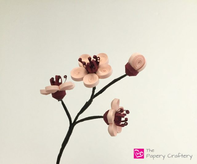Quilling Paper Cherry Blossoms ~ One of the first signs of Spring made from paper || www.ThePaperyCraftery.com