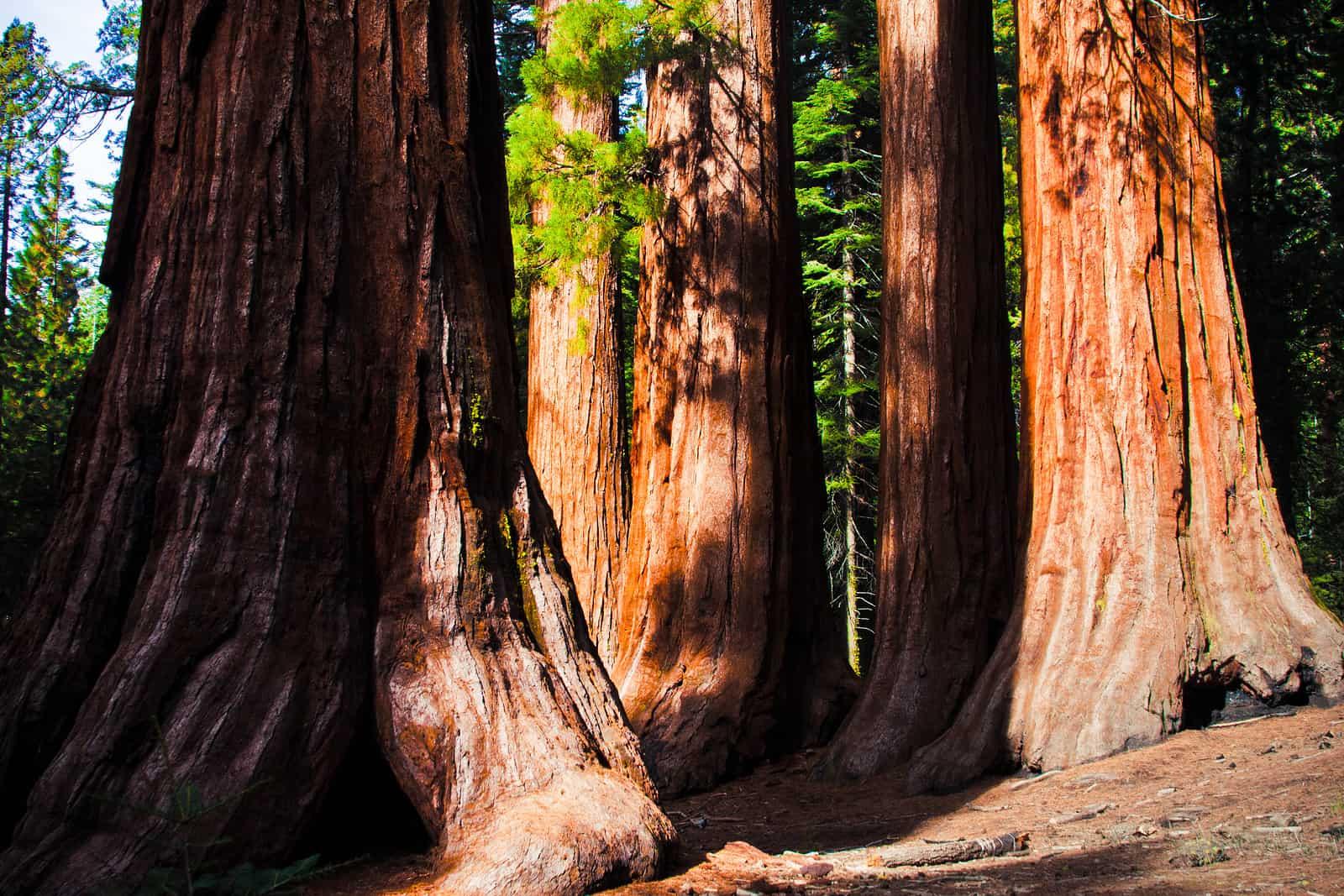 https://i1.wp.com/www.theparadigmrealtygroup.com/wp-content/uploads/2017/10/bigstock-Giant-Sequoias-in-Yosemite-Nat-45266944.jpg