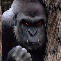 Big Red Eye, NJ Bigfoot