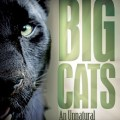 Australian big cats