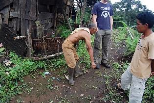 Imitating the orang pendek's gait