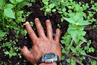 Orang pendek footprint