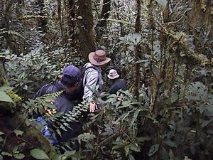Adam Davies in Sumatra