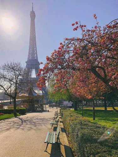 Cherry blossoms at the Eiffel Tower during coronavirus pandemic