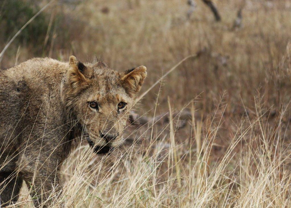 African Safari Child Friendly