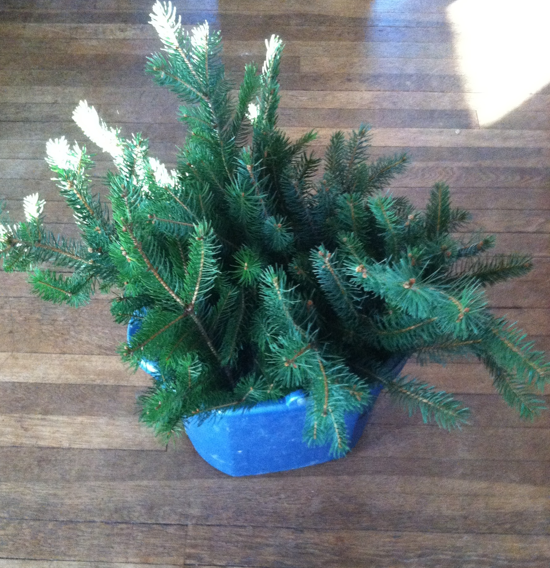 Christmas Tree Life Extender: Preserved Fresh Evergreen Branches For Christmas