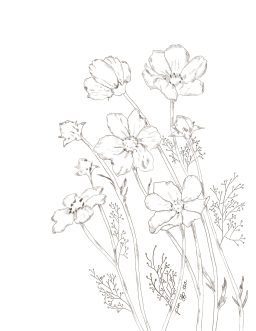 Pencil sketch of blooming wildflowers.