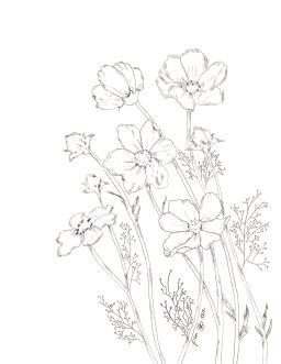 Pencil sketch of blooming wildflowers.