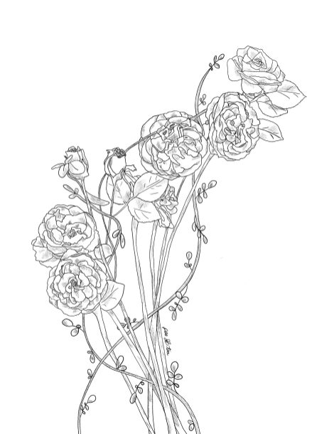Pencil sketch of blooming peonies entwined with roses and climbing vines