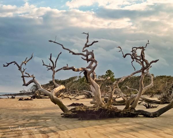 Driftwood--10-Edit-Edit