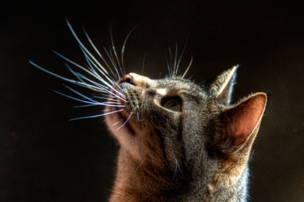 Cats whiskers The Pet Product Guru