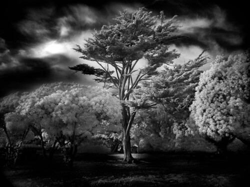 60 Inspiring Examples of Black and White Photography ...