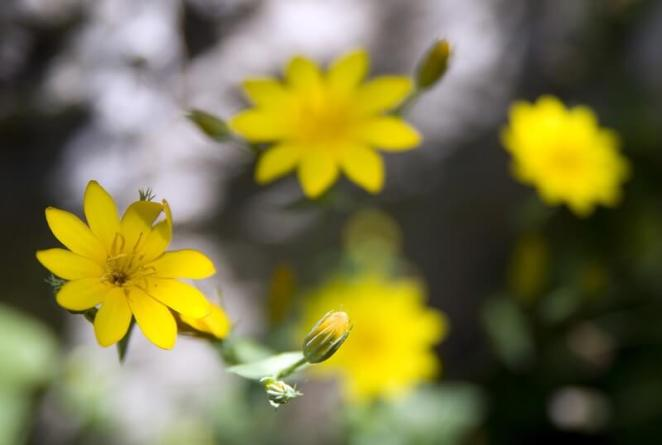 Kamel Lebtahi - Flowers