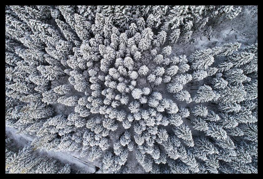 sneeuw op bomen