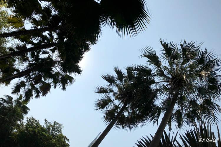 Bangkok Ultimate Travel Guide Shangri-La Palm Trees
