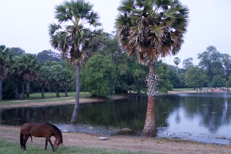 Monday Postcard Cambodia Horse Angkor Wat