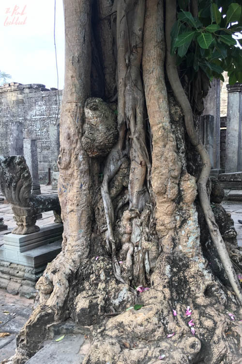 Angkor Wat Bayon Tree Roots