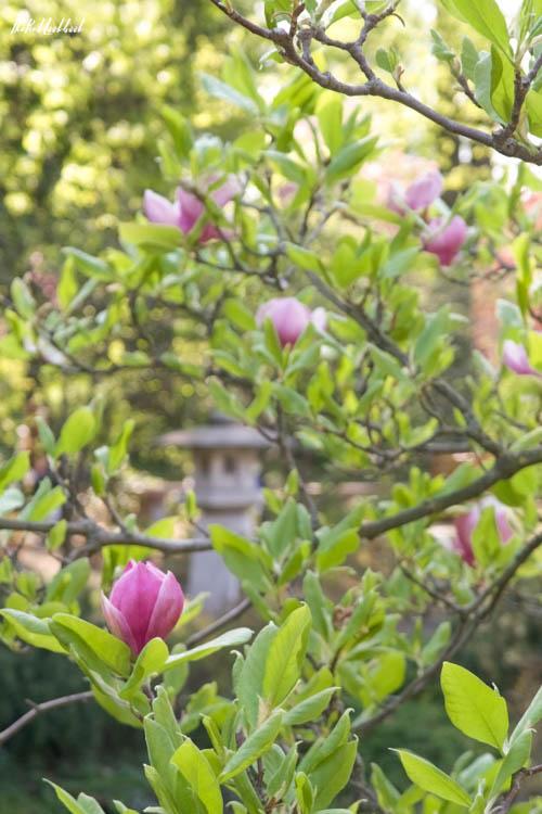 Setagaya Park Magnolia Sculpture
