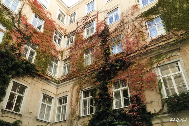 Things to Do in Vienna in Autumn Courtyard