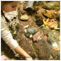 Touch Tank at the Boston MA