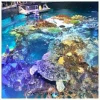 Giant Ocean Tank, Boston Aquarium