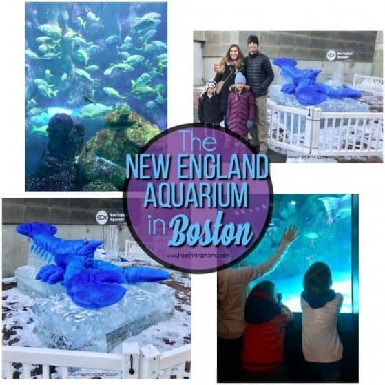 Your guide on visiting the New England Aquarium in Boston MA.
