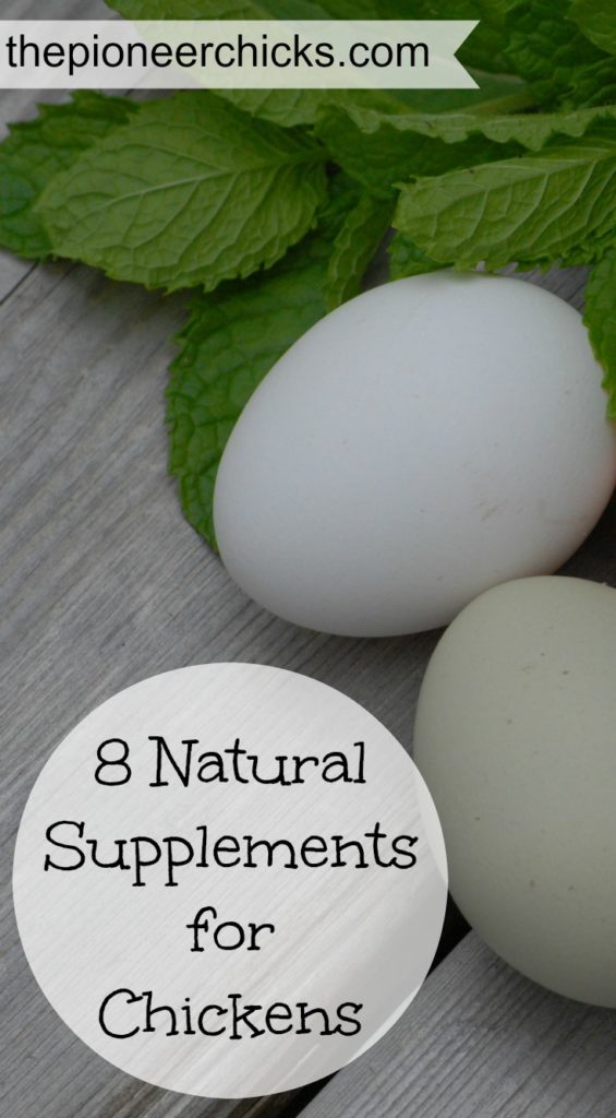 8 Natural Supplements for Chickens- These nutritous and beneficial supplements will help keep your flock happy, healthy, and productive!