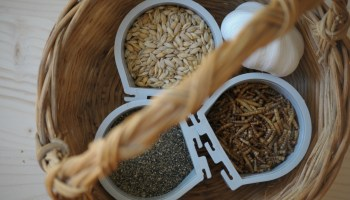 Homemade Chicken Feed Supplements- how to use them