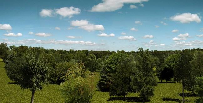 Image-2-Plane-Trees-C4D-Plugin