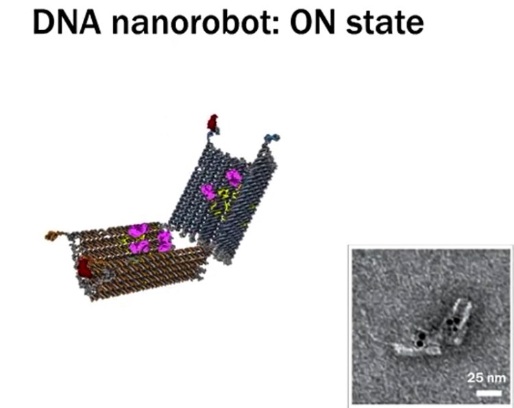 4_DNA nanobots