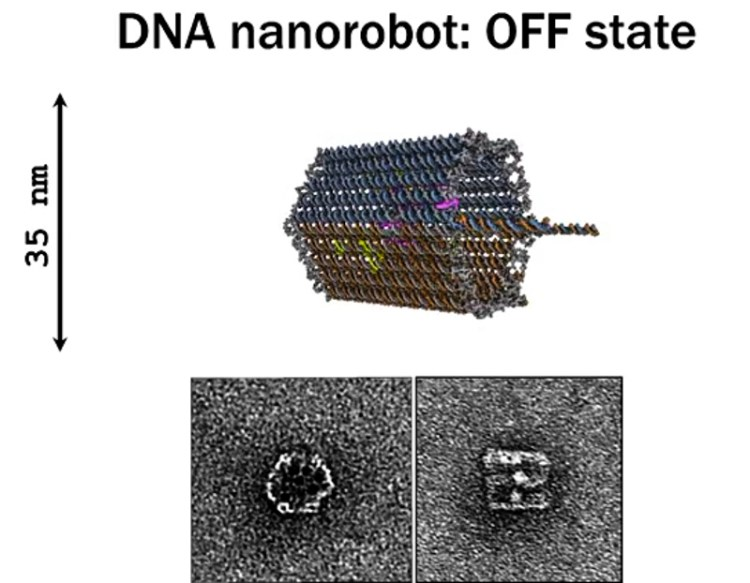 5_DNA nanobots