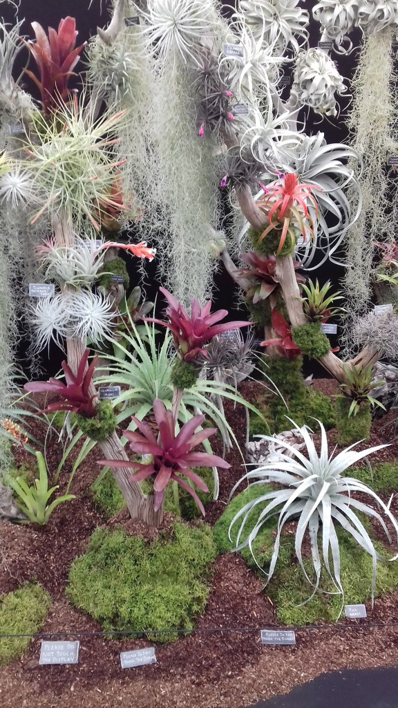 A display of succulents