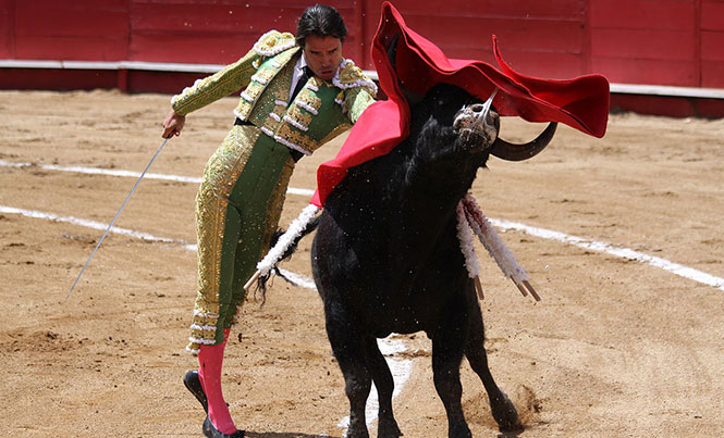 The Fight to Abolish Bullfights in Quintana Roo