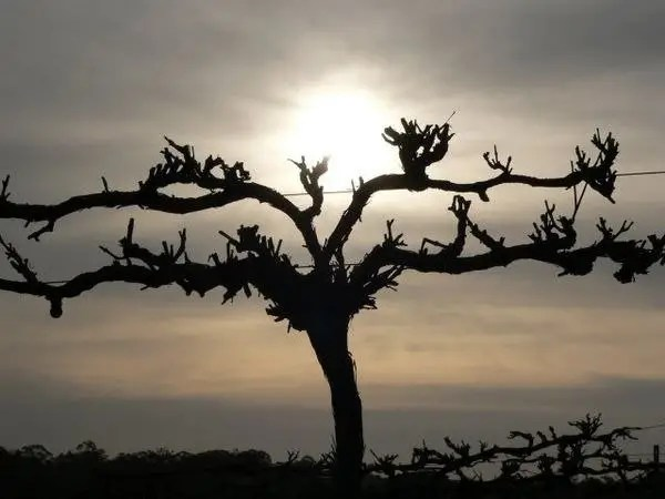 How Deep Are Your Roots? Some Advice For Christian Apologists