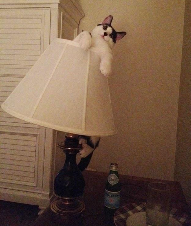 cea-mai-amuzanta-poza-cu-pisici