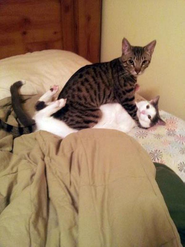 cea-mai-haioasa-poza-cu-pisici