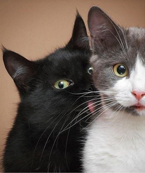 cele-mai-bune-imagini-cu-pisici