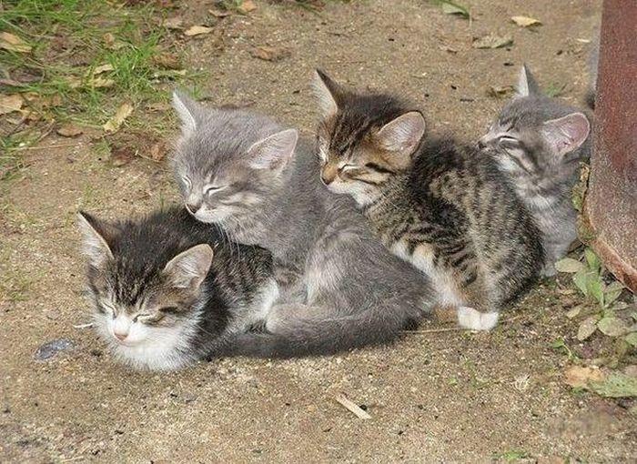 fotografie-adorabila-pisici