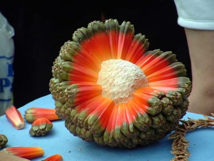 fructe-exotice-hala
