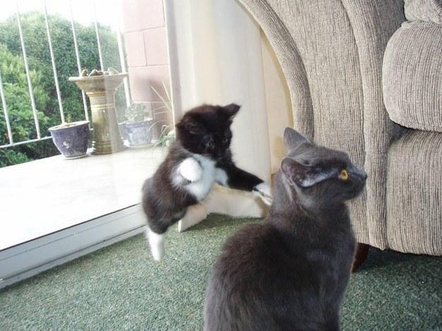 imagine-amuzanta-cu-pisici