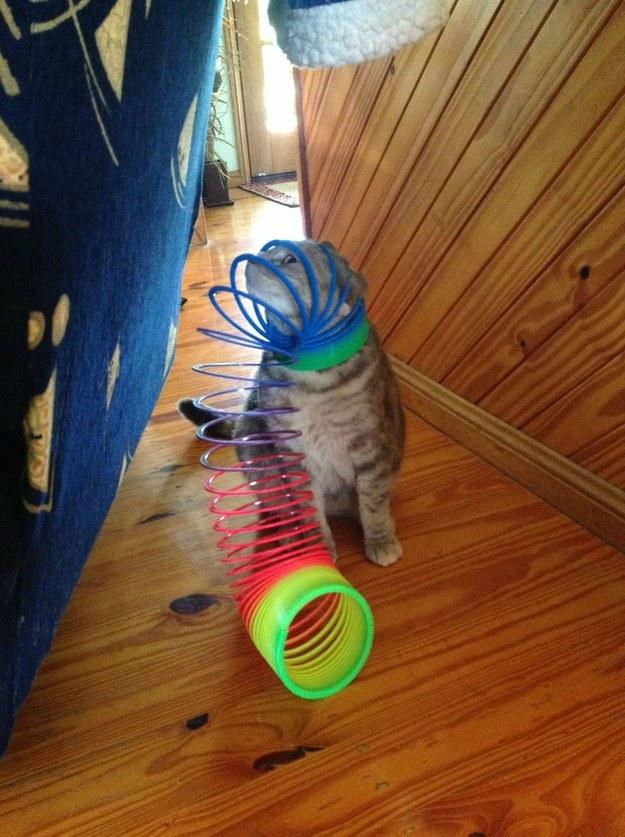 imagine-pisica