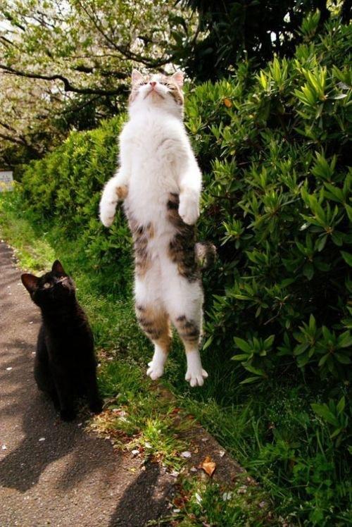 imagine-pisica-amuzanta