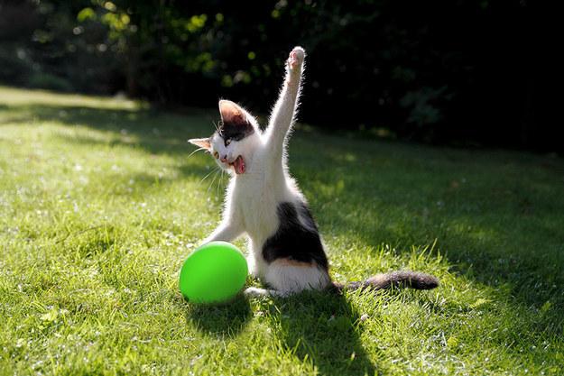 pisica-cu-mingea