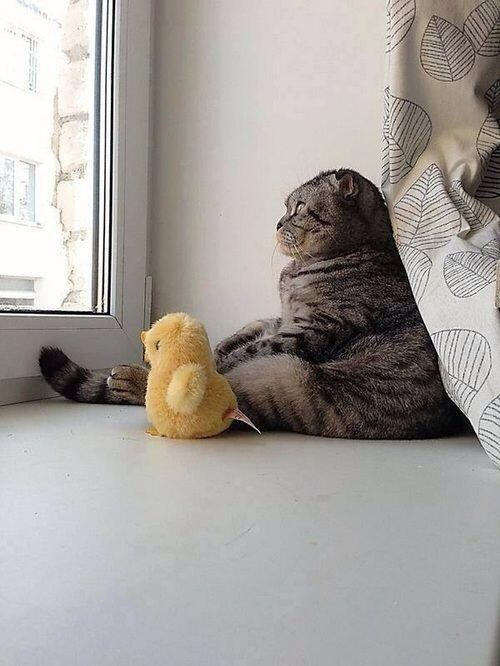 pisica-haioasa